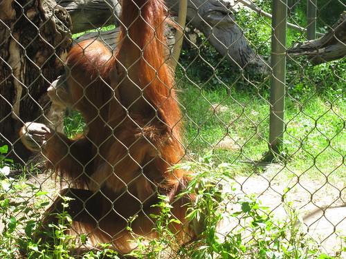 Zoo 4/27/11