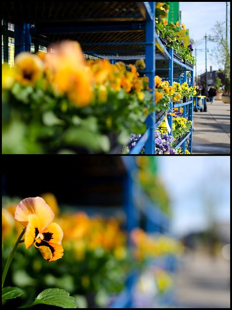 Refocus / Spring