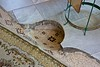 Spot of the head of John the Baptist 2