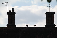cats... (~Anita Murphy~) Tags: roof cats chimneys