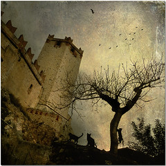 Cats (pixel_unikat) Tags: italy cats tree tower castle birds dawn malcesine thankstoskeletalmessandjoessistahfortextures crationforghostworkstexturecompetition