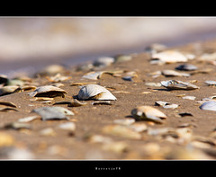 Beach Bokeh . . .   . .  .[explored] (Borretje76) Tags: sun beach home water netherlands dutch field strand iso100 vakantie sand bokeh sony shell sigma explore leftovers land op enschede depth lekker schelp schelpen weg zand f9 70200mm diepte eigen scherpte explored zandstrand gupr borretje76 dslra580