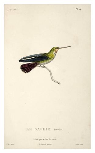 022-Les Trochilidées ou les Colibris et les Oiseaux-Mouches… 1832- René Primevère Lesson- DGZ–Göttinger Digitalisierungszentrum