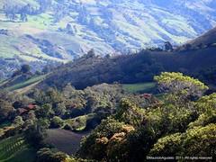 Vereda Nori (Ivan Mauricio Agudelo Velasquez) Tags: colombia paisaje antioquia cultivo sonson touraroundtheworld