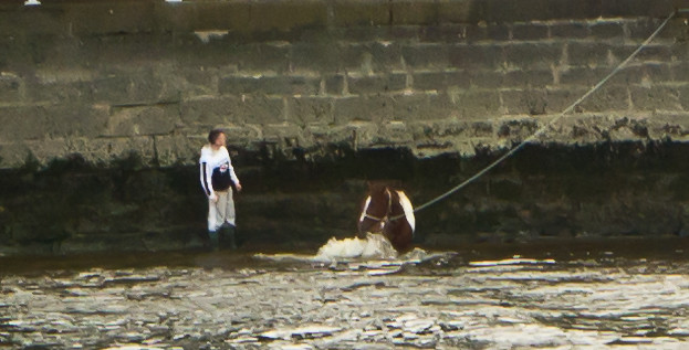 Limerick - You Can bring a Horse To Water But You Cannot Make It Drink