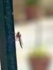 dragonfly (Tarun Chopra) Tags: travel india canon photography greatshot fujifilm gurgaon bharat hs20 superzoom hindustan greatcapture exr hindusthan fuzifilm indiatravelphotography superzoomcamera hs20exr fujifilmfinepixhs20exr finepixhs20exrhs22exr topzoomcamera finepixhs20exr superzoomcam gurugram