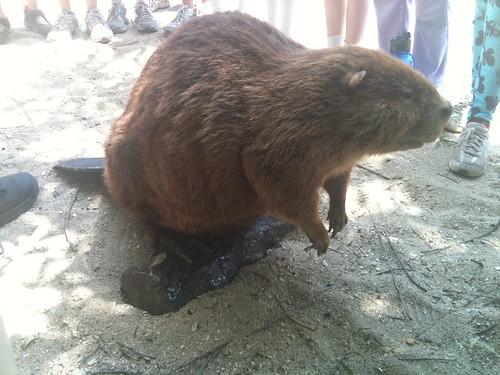 ... as a porn site. I did, though. I did dress up a park ranger's beaver.