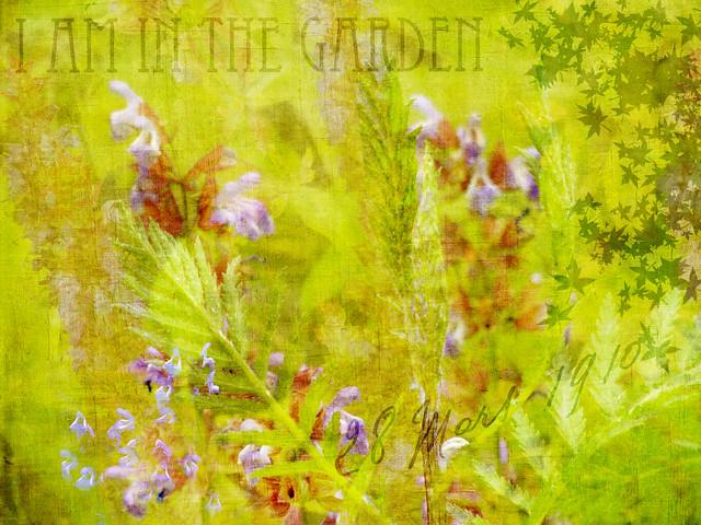 garden scene I am in the garden