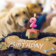 Making My Birthday Wish... And Oh, That Birthday Pupcake Was Scrumptious (VeryViVi) Tags: birthday party dog cake goldenretriever doggy gettyimages 2ndbirthday birthdaycandle missvivigold veryvivi
