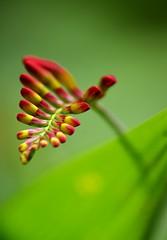 Boutons de fleurs 3D (Lunatique-girl) Tags: flowers red plant paris france flower color macr