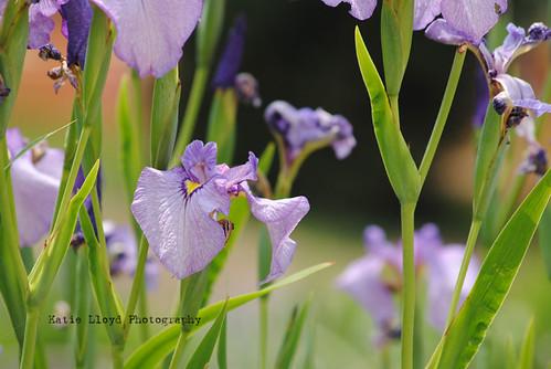 2011-06-13_Arboretum_0215