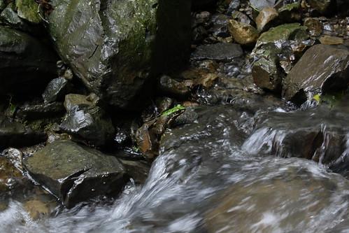 新北市三峽雲森瀑布_21_2011.06.28