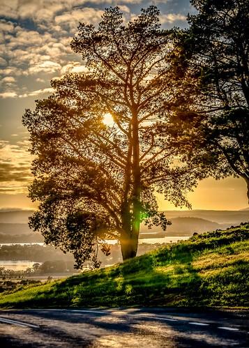 National Arborteum Sunrise-21