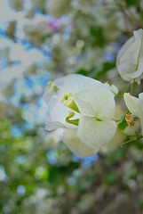 56/365... Primavera!! #365Days #365Dias #365PhotoProject (cristianyocca) Tags: 365days 365photoproject 365dias