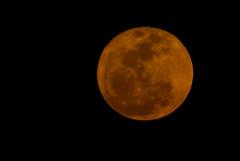 78/365 Super Moon (The Suss-Man (Mike)) Tags: columbus sky moon nature night georgia alabama moonrise chattahoocheeriver phenixcity thesussman sonyalphadslra200 supermoon project36612011
