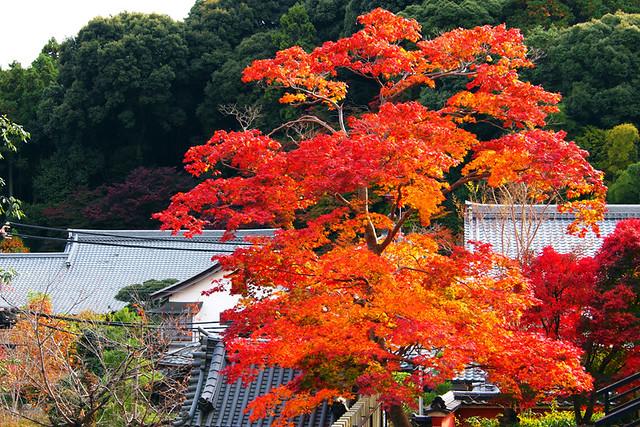 20101118_140136_當麻寺