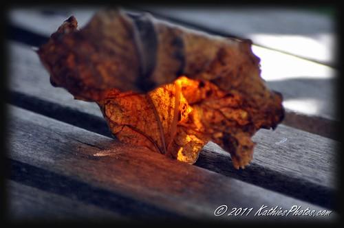 82-365 Sun lit leaf