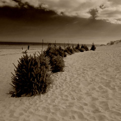 Christmas on the beach.jpg (half man half penguin) Tags: christmas leica sea tree beach sand dunes 4 lincolnshire dlux optikverve elementsorganizer