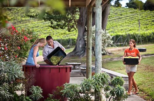 Arbeiter auf einem Weingut auf Waiheke Island