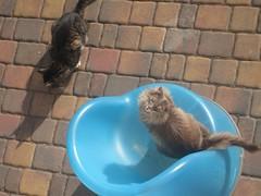 streitduo (nasharz) Tags: catnipaddicts