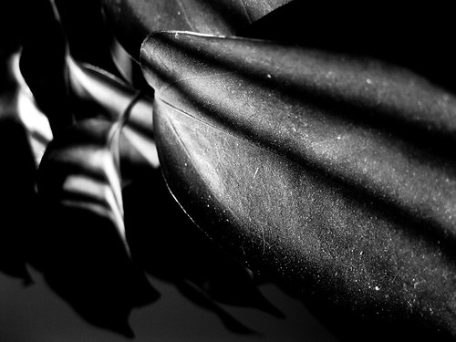 leaves and shadows