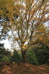 高尾山の秋