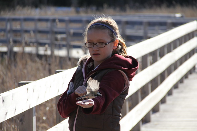 Birdfeeding at Jack Pine