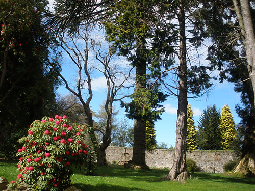 Kilmacurragh Arboretum, Co. Wicklow