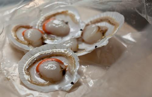scallops raw