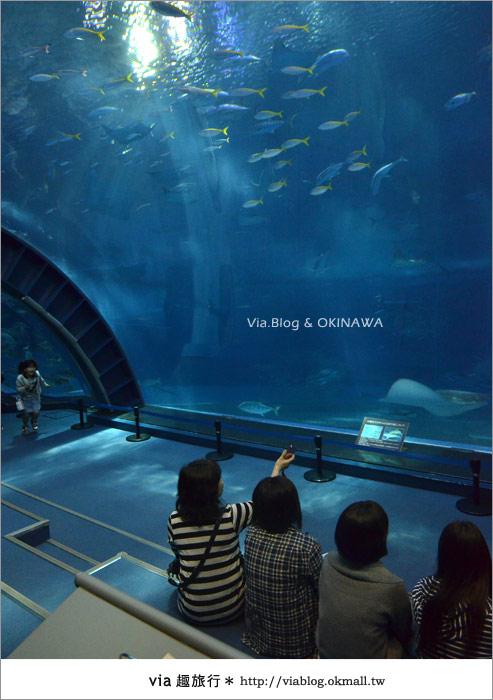 【沖繩景點】美麗海水族館~帶你欣賞美麗又浪漫的海底世界!33