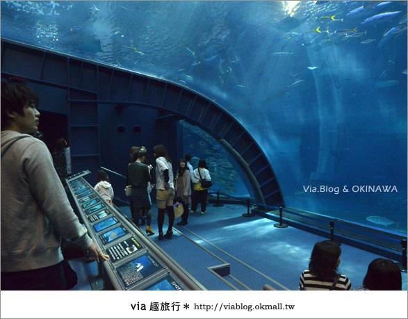 【沖繩景點】美麗海水族館~帶你欣賞美麗又浪漫的海底世界!32