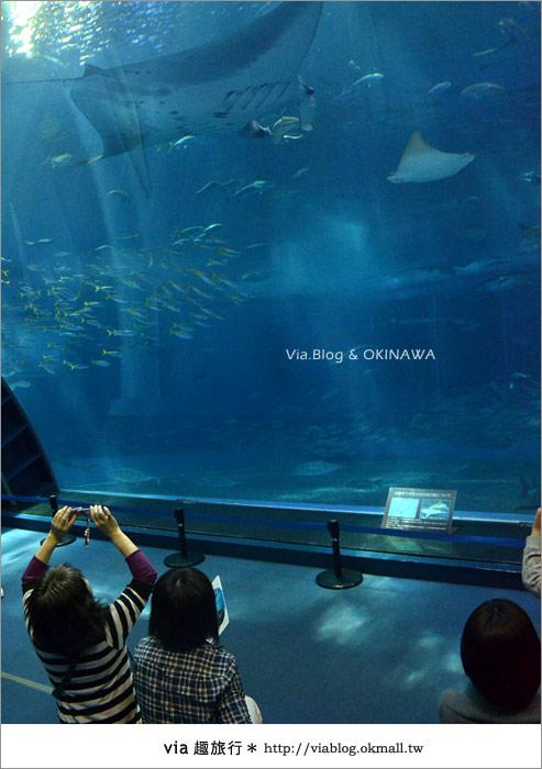 【沖繩景點】美麗海水族館~帶你欣賞美麗又浪漫的海底世界!34
