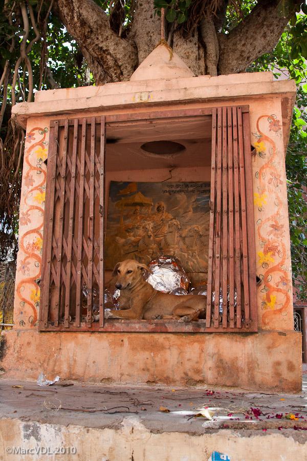 Rajasthan 2010 - Voyage au pays des Maharadjas - 2ème Partie 5598968788_ced5d70032_o