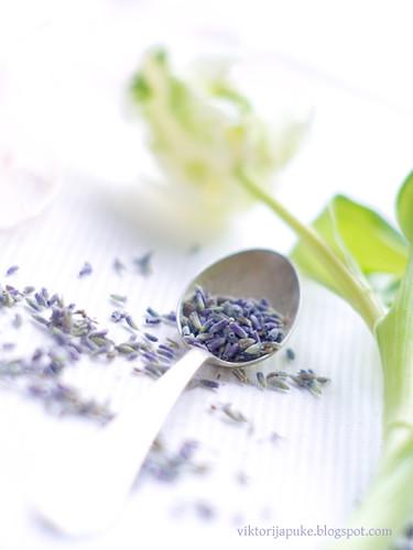 Lavender by Viktorija_k