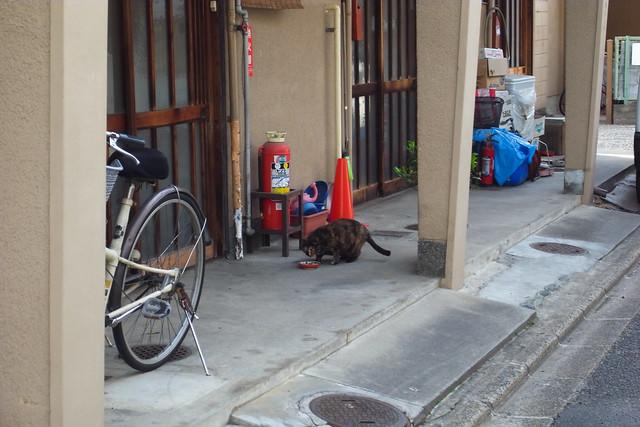 Today's Cat@2011-04-10