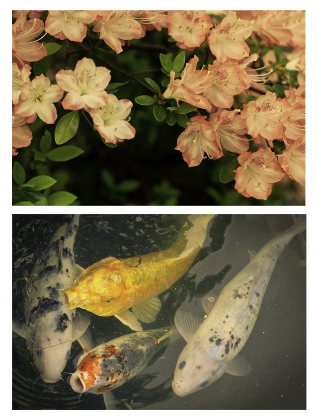 fishandflowers