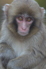 Kid      (April 9,2013  Explore ) (Masashi Mochida) Tags: monkey coth impressedbeauty natureselegantshots awajikid