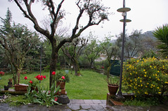 La Primavera ci ripensa ? (orsone1947 /(big bear)) Tags: primavera fiori pioggia giardino giardinaggio