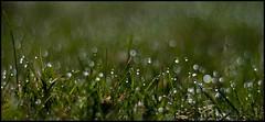 110415-Day 141/365 (Peter Hillhagen) Tags: smal fotosondag fs110417