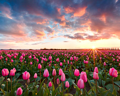 Skagit Valley Tulip Festival (KPieper) Tags: flowers sunset festival landscape washington valley tulip skagit mountvernon kpieper