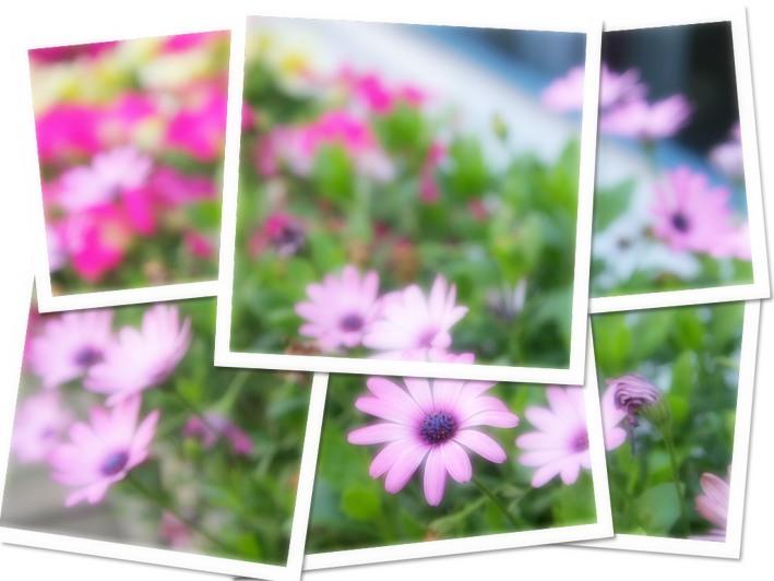 IMG_5432-s.jpg