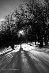Winter Sunset (Jordan Stern) Tags: trees winter sunset sun white snow black cold tree contrast high ray freezing rays setting