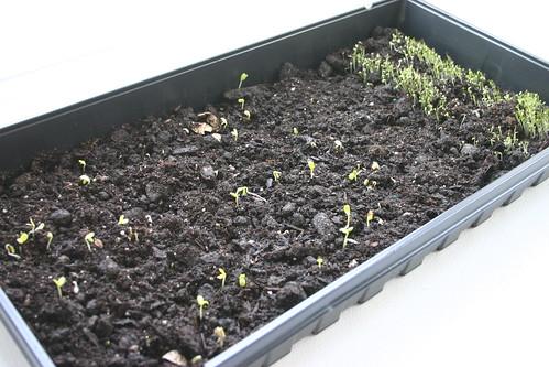 Starting my garden