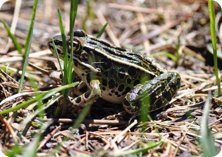 Frog spotting!