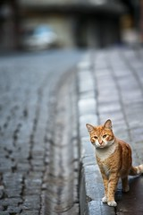 Cats from Istanbul (Patrick Frauchiger) Tags: city cats animal cat turkey asia europe istanbul trkei stadt metropolis katze katzen turkish bosphorus tier metropole bosporus stambul trkisch stamboul