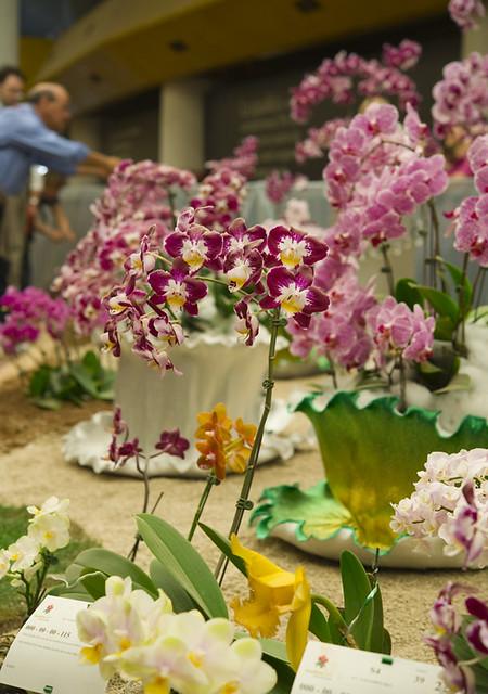 Цветочная выставка в Генуе 15