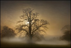 One Winters Morning (adrians_art) Tags: morning trees winter sky cloud mist fog sunrise woodland early sunburst