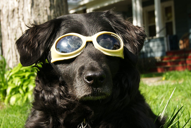 doggles12