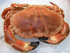 Chancre Crab cooked ready to eat.