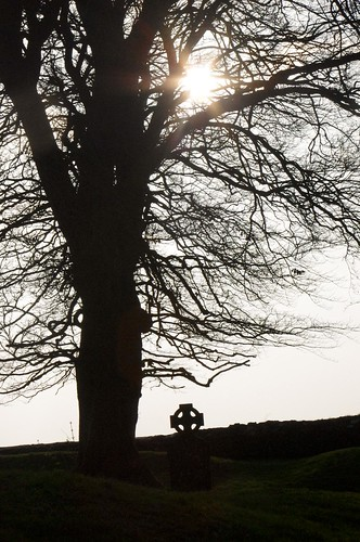 Celtic Cemetery stone & Tree at hill of Tara
